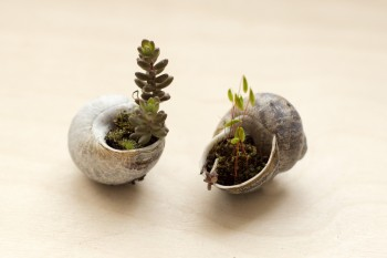 Terrariums and Snail Shells